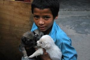 DSC_0233ffboywith pups